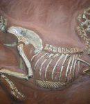 Descoperirea unei fosile de reptilă cu două capete